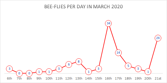 Graph of bee-fly records per day in March 2020