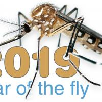 Year of the Fly logo